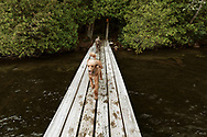 two poodles running down a dock on a Lake
