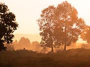 A rural  countryside scene in Siem Reap Province, Cambodia