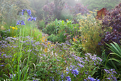 Borders at Glebe Cottage in early August with agapanthus and asters in the foreground. Design: Carol Klein