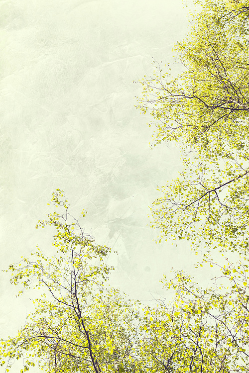 Birch tree twigs and foliage against a textured pale sky