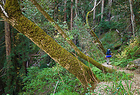 Hiking down Pine Ridge Trail, Big Sur, California.