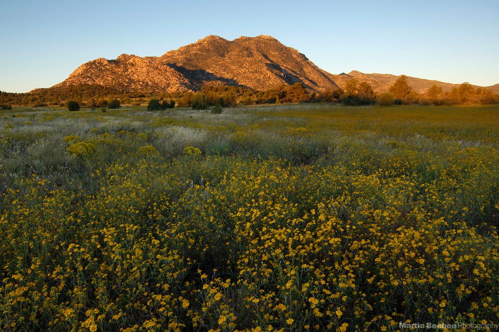 Morning light on Granite Mountain above a field of annual goldeneyes (Viguiera annua), Prescott National Forest, Prescott, Arizona