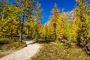 Trail through Larch Valley, Banff National Park, Alberta, Canada