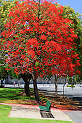 Flowering Trees and bench in park - Brisbane, Australia <br /> <br /> Editions:- Open Edition Print / Stock Image
