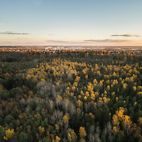 Aerial view of a colorful nordic pines forest at sunset in Estonia.