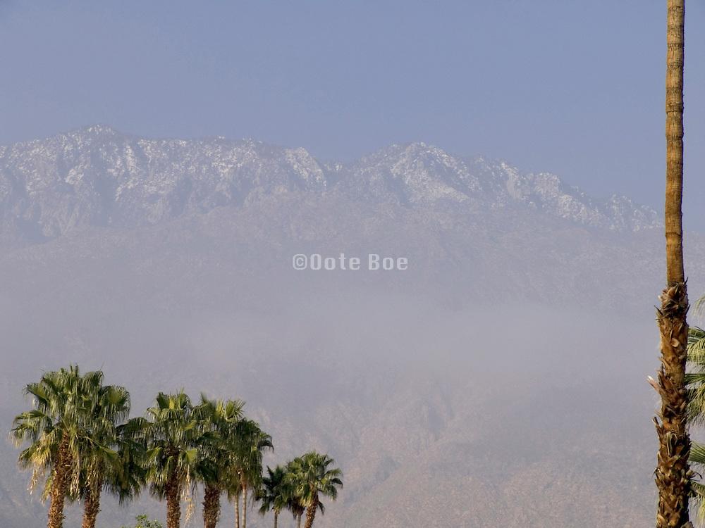 palm trees again snow topped mountain range USA
