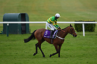 Horse Racing - 2021 National Hunt - Cheltenham Festival - Day Four - Gold Cup Day - Cheltenham<br /> <br /> Champ pulls up on the first lap of the Gold Cup.<br /> <br /> COLORSPORT/ASHLEY WESTERN