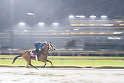 November 1-3, 2018: Breeders' Cup Horse Racing World Championships. Belle Laura