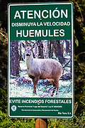 A sign implores drivers to slow for huemules and prevent forest fires on RP23, near Lago del Desierto, in Santa Cruz Province, Argentina, Patagonia, South America. The south Andean deer (Hippocamelus bisulcus), also known as the southern guemal, Chilean huemul or güemul, is an endangered deer species native to the mountains of Argentina and Chile. The huemul is part of Chile's national coat of arms and is a National Natural Monument.