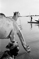 NIGER. Tillabery. 08/12/1985. Watering the camels at the Niger