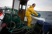 Local fisherman Neil Cameron hauls up creels filled with Velvet and Green Crab between Fionnphort and Iona, Isle of Mull, Scotland. The contents of 500 creels is taken every week by truck and sold to Spain. On each line are 25 creels that are spaced out in different areas of the nearby bays. The main fishing on the Ross of Mull, Ulva Ferry and Tobermory is now is commercial shell fishing with baited traps (creels) for lobsters (homarus gamarus), edible brown crabs (cancer pagurus), Prawn (Norwegian Lobster) and velvet swimming crab (necora puber). Scallop dredgers and Prawn trawlers also operate from both ends of the island, dragging the seabed for their catch. Before the late 1960s shell fishing with creels was generally carried out on a seasonal or part time basis allied to crofting, farming or another shore based job.