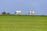 Nederland, Groesbeek, 22-10-2013Koeien, staan in een weiland.Foto: Flip Franssen/Hollandse Hoogte