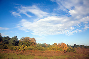 Winter heathland landscape with blue sky, Shottisham, Suffolk, England