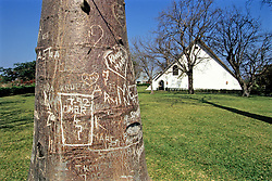 Tree With Carved Names in It At Mlangeni