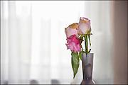 Nederland, Nijmegen, 19-2-2013Een bosje uitgebloeide rozen in een kleine vaas.Foto: Flip Franssen