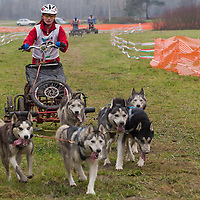 Competitor rides her dogsled during the FISTC Dog Cart European Championships in Venek (about 136 km Norht-West of capital city Budapest), Hungary on November 22, 2014. ATTILA VOLGYI