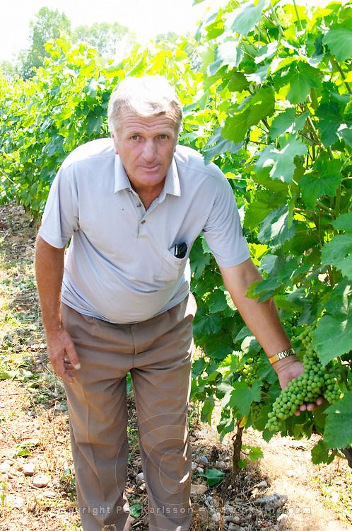 Gezim Coku, agronomist and vineyard manager. In the vineyard showing a bunch of grapes. Muscat grape variety. Kantina Miqesia or Medaur winery, Koplik. Albania, Balkan, Europe.