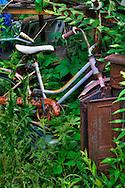 Bike in undergrowth