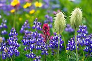 Wildflower Photos