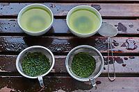 Japon, île de Honshu, région de Shizuoka, usine de thé, gouteur de thé // Japan, Honshu, Shizuoka, tea factory, tea tasteur