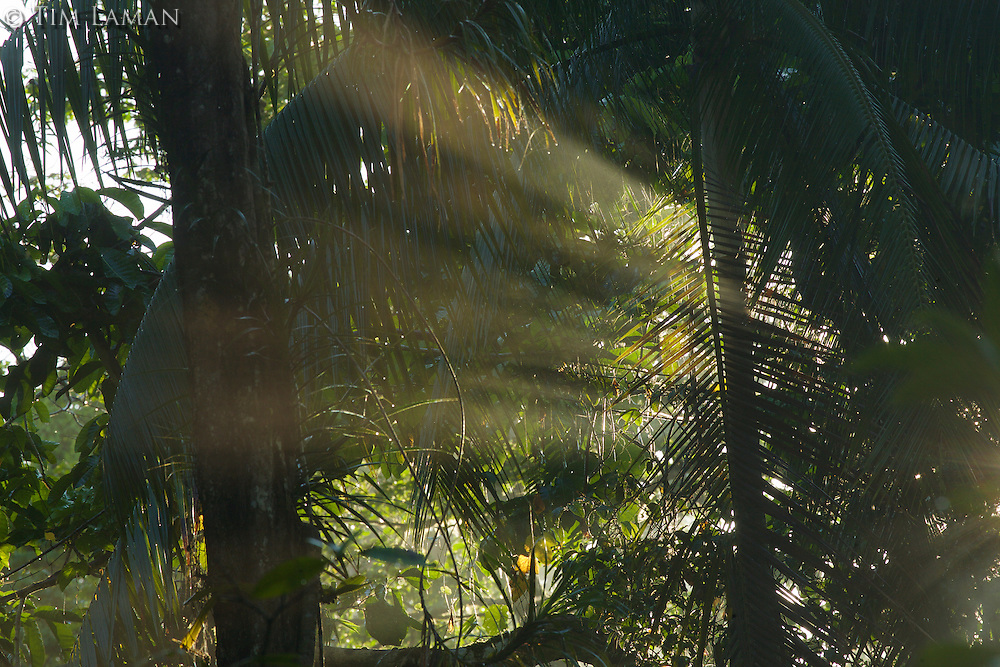 Early morning light in the rain forest of Halmahera Island, Indonesia.