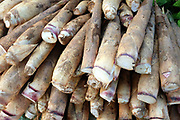 Bamboo shoots for sale at Hua Kua market on the outskirts of Vientiane city, Lao PDR. The Lao are very reliant on products collected or caught from the wild in nearby forests, fields and streams. A walk through any market will illustrate the agro and bio-diversity of Laos.