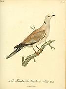 Tourterelle blonde Blonde Dove, Male  from the Book Histoire naturelle des oiseaux d'Afrique [Natural History of birds of Africa] Volume 6, by Le Vaillant, Francois, 1753-1824; Publish in Paris by Chez J.J. Fuchs, libraire 1808