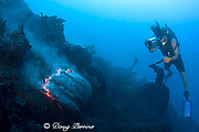 videographer Shane Turpin films pillow lava at underwater eruption of Kilauea Volcano Hawaii Island ( the Big Island ) Hawaii U.S.A. ( Central Pacific Ocean ) MR 382