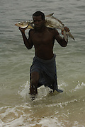 Vezo fisherman bringing catch ashore. Lavanono (Antandroy area) fishing village, south coast of MADAGASCAR