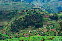 Steep terraced farming, near Bwindi Impenetrable Forest, Uganda.