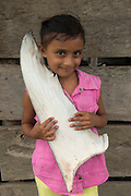 Shark fins commercial catch<br /> &  Tania Maybely Ortega Munoz<br /> Quetzalito<br /> Guatemala<br /> Central America