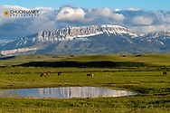 Horses graze in ranch pasture with Castle Reef along the Rocky Mountain Front near Augusta, Montana, USA