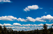 dark green trees, horizon with blue sky and white puff clouds