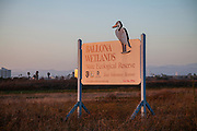 Ballona Wetlands State Ecological Reserve, Playa Del Rey, Los Angeles, California, USA