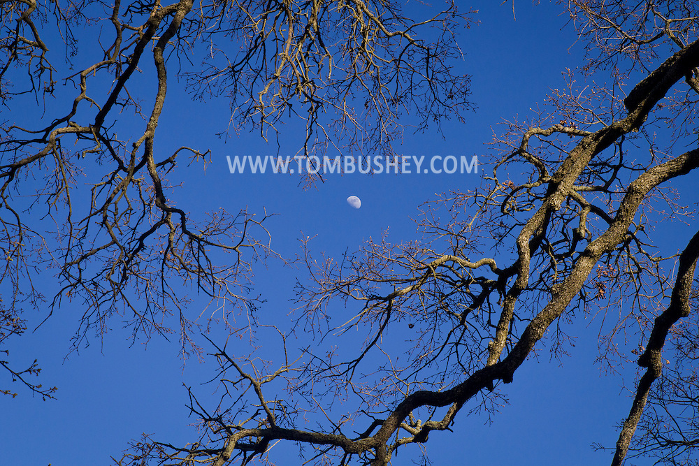 Citrus Heights, California - The moon framed by tree branches in the daytime sky on March 10, 2014.