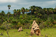 Termite mounds<br /> Savannah, <br /> Rupununi<br /> GUYANA<br /> South America