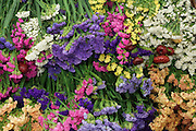 """""""New Covent Garden Wholesale Flower Market"""" (Photograph must be captioned like this - I had to sign a contract!!)<br /><br />The main selling days for local British fresh flowers are on Monday and Thursday mornings. The main sellers are Pratleys<br /><br />British local flowers, grown nearby, count for around 10% of the UK market, traveling less than a tenth of their foreign counterparts which are often flown in from abroad. Nearly 90% of the flowers sold in the UK are actually imported, and many travel over 3000 miles. Local flower farms help biodiversity, providing food and habitat to a huge variety of wildlife, insects including butterflies, bugs, and bees. Often local flower farmers prefer to grow organic rather than using pesticides. British flowers bloom all the year around, even in the depths of winter, and there are local flower farms throughout the country.<br /><br />Many people like the idea of the just picked from the garden look, and come to flower farms throughout Britain to pick their own for weddings, parties and garden fetes. Others come for the joy of a day out in the countryside with their family. Often a bride and her family will come to pick the flowers for her own wedding, some even plant the seeds earlier in the year."""