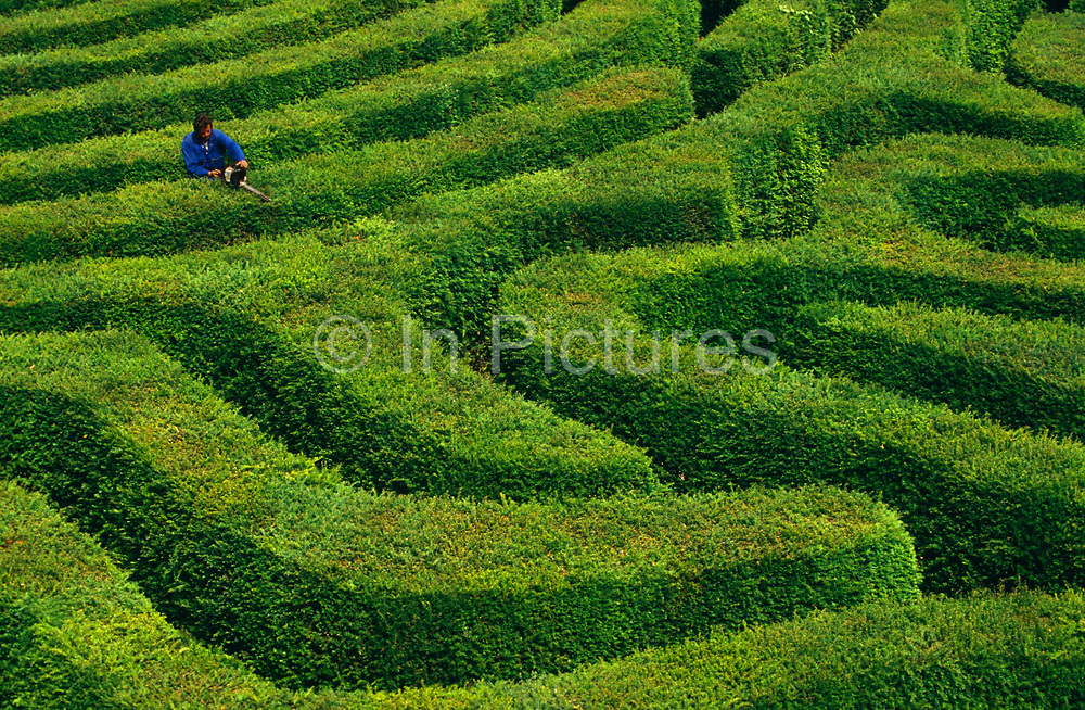 Overwhelmed by the task ahead, we look down from a high viewpoint, an estate worker wearing blue overalls stands on tall stepladders to trim the famous Longleat Hedge Maze with electric clippers. Made up of more than 16,000 English Yews, Longleat's spectacular hedge maze - the world's largest - was first laid out in 1975 by the designer Greg Bright. The Maze covers an area of around 1.48 acres (0.6 hectares) with a total pathway length of 1.69 miles (2.72 kilometres). Unlike most other conventional mazes it's actually three-dimensional.