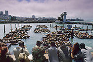 Tourists watching Sea Lions on dock at Pier 39, San Francisco, California