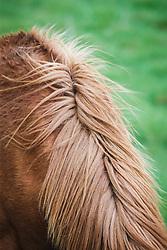 Horse in field, Ballyvaghan, County Clare, Ireland