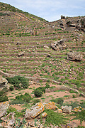 The vertical vineyards of Pantelleria rise up the shoulder of Montagna Grande with dry-stone walls and terraces.