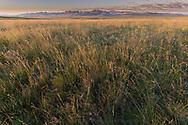 Tall Grass Prairie, Blackfeet Reservation, Badger Two Medicine, Montana