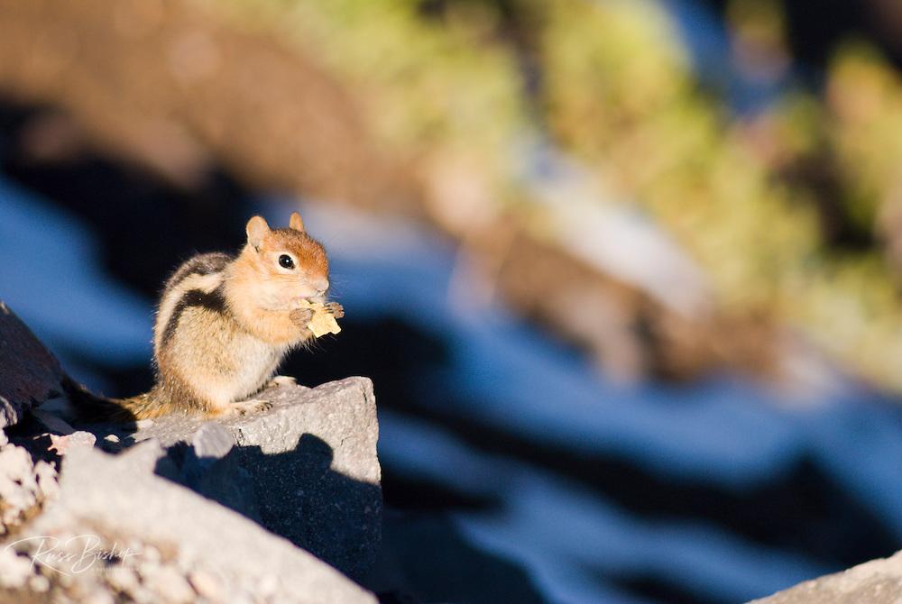 Chipmonk (Eutamias striatus), Crater Lake National Park, Oregon