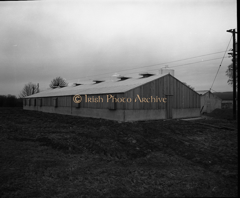 E.S.B. Piggery North Co. Dublin..1971..02.02.1971..02.02.1971..2nd February 1971..Image of the Piggery in North County Dublin which was powered and run by the E.S.B. (Electricity Supply Board).