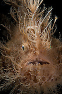 Macro imagery from the Lembeh Straits 2013