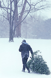Man walking through a snow storm with his freshly cut Christmas tree