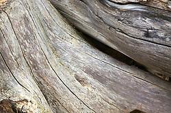 Close up of tree stump,