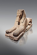 Ancient Egyptian Sphinx statue, sandstone, New Kingdom, early 19th Dynasty (1292-1250), Karnak, Temple of Amon. Egyptian Museum, Turin. Grey background<br /> <br /> The Phatoah and queen could be represented by Sphinx statues and by associating human faces with the body of a lion the Egyptians combined the strength of the animal that was connected to the sun god with human inetelligence. In this guardian rols sphinxes were generally placed facing each other on either side of temple gates, processional ways or dooways inside the temple. . Drovetti Collection. C1408 .<br /> <br /> If you prefer to buy from our ALAMY PHOTO LIBRARY  Collection visit : https://www.alamy.com/portfolio/paul-williams-funkystock/ancient-egyptian-art-artefacts.html  . Type -   Turin   - into the LOWER SEARCH WITHIN GALLERY box. Refine search by adding background colour, subject etc<br /> <br /> Visit our ANCIENT WORLD PHOTO COLLECTIONS for more photos to download or buy as wall art prints https://funkystock.photoshelter.com/gallery-collection/Ancient-World-Art-Antiquities-Historic-Sites-Pictures-Images-of/C00006u26yqSkDOM