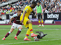 Football - 2021 / 2022 Premier League - West Ham United vs Crystal Palace - London Stadium - Saturday 28th August 2021<br /> <br /> Jordan Ayew of Crystal Palace challenged by a pigeon and Aaron Cresswell of West Ham<br /> <br /> Credit : COLORSPORT/Andrew Cowie