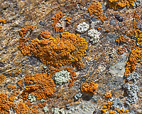 Yellow and white lichen in Rocky Mountain National Park. Image taken with a Nikon D2xs camera and 105 mm f/2.8 VR macro lens.